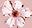 cherry-blossom-transparent-favicon
