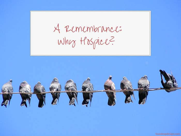 """Pigeons on a Wire with the words """"A Remembrance: Why Hospice?"""